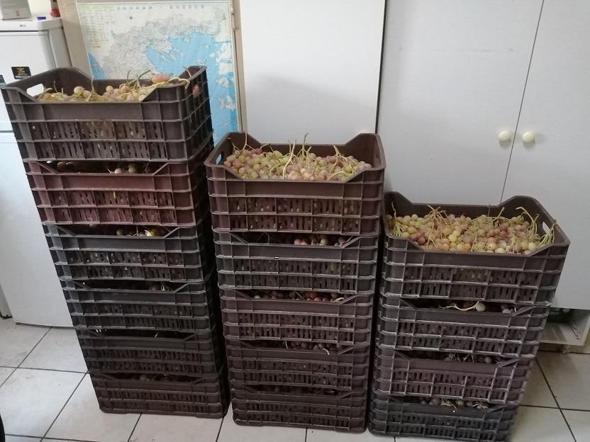 sillipsi-gia-stafilia-korinthos