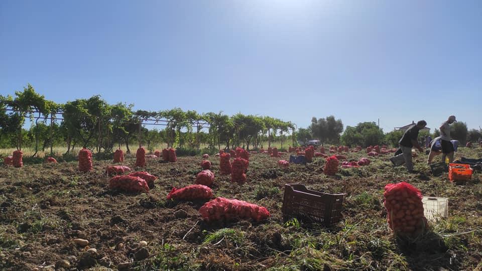 mitropolitis-alexandros-sygkomidi-patatas