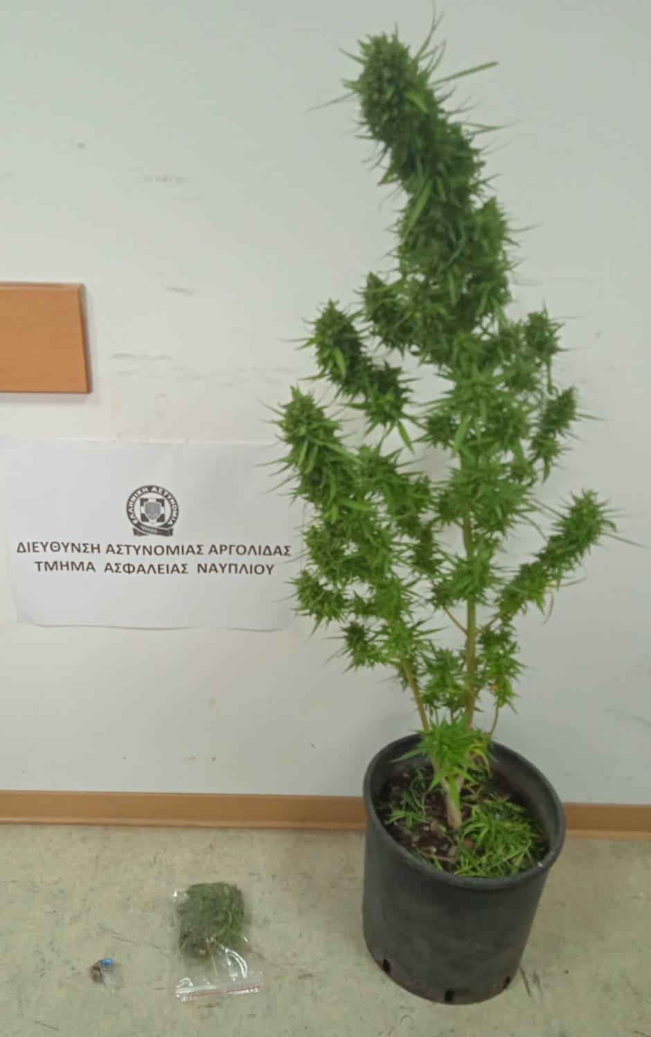 narkotika-syllipsi-argolida
