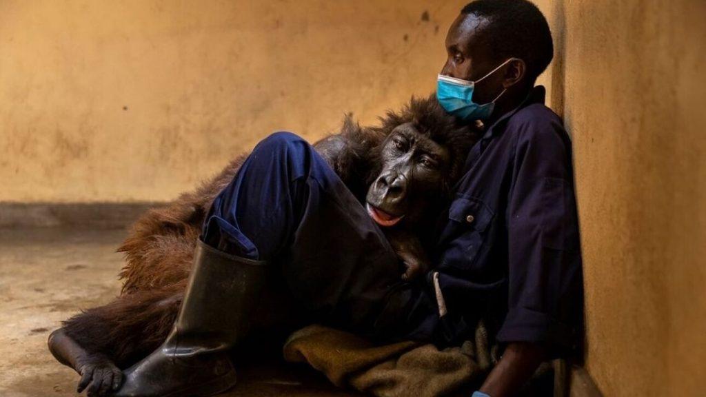 gorilla-ntakasi