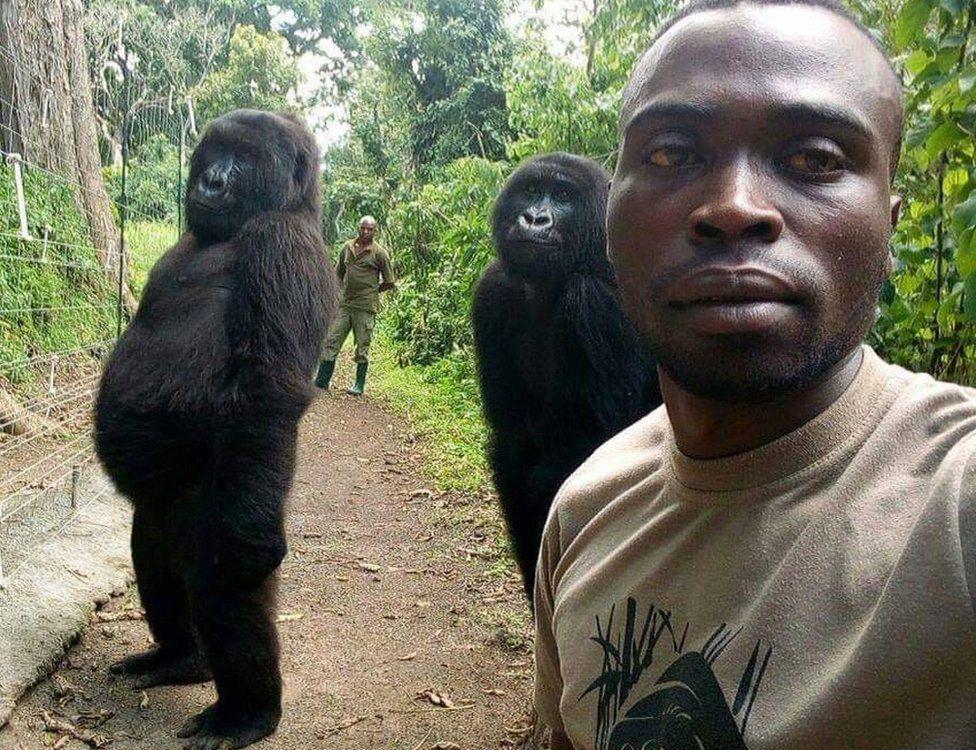 gorilla-ntakasi-selfie